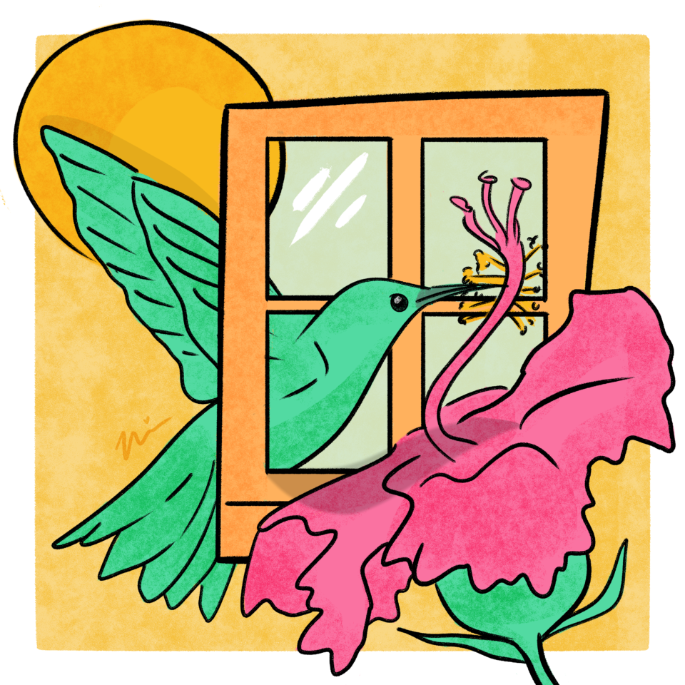 Illustration by Nia Chavez; a green hummingbird sipping a pink flower through a window.